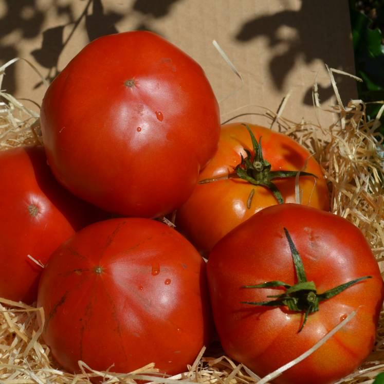 Tomates de ensalada Raf ECO 1kg