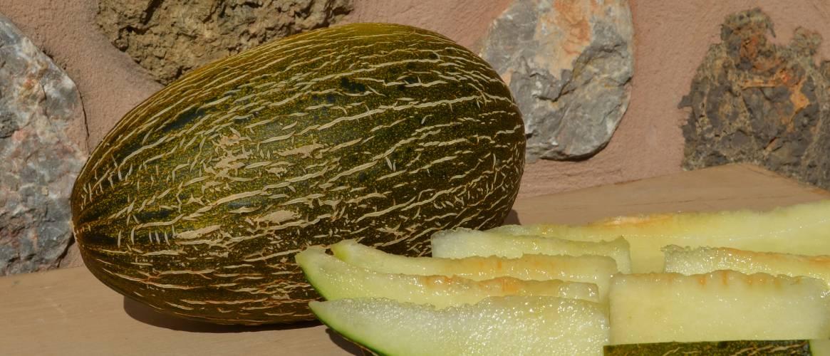 Melon – Melón Piel de Sapo