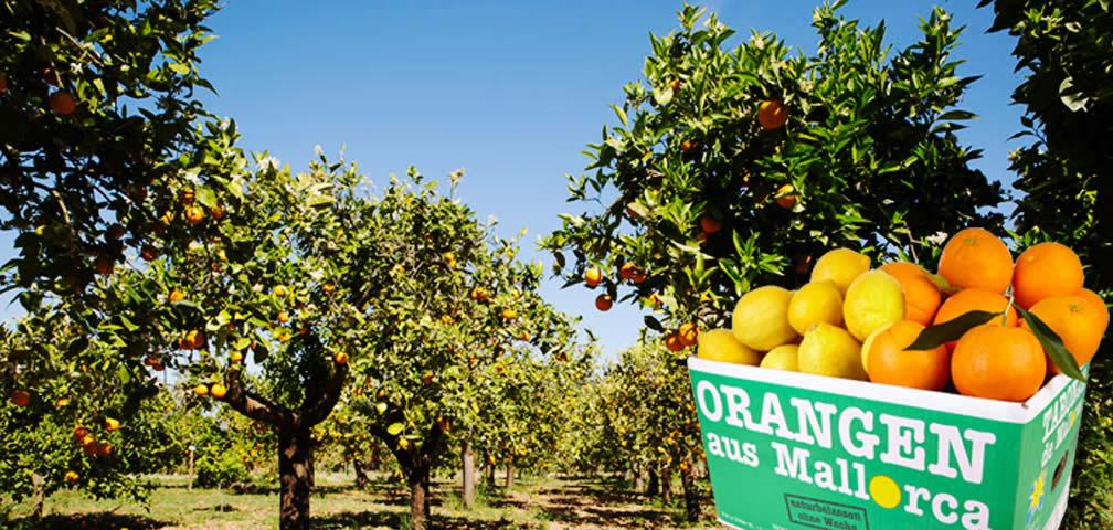 Naranjas y Limones caja de 10kg (7+3)