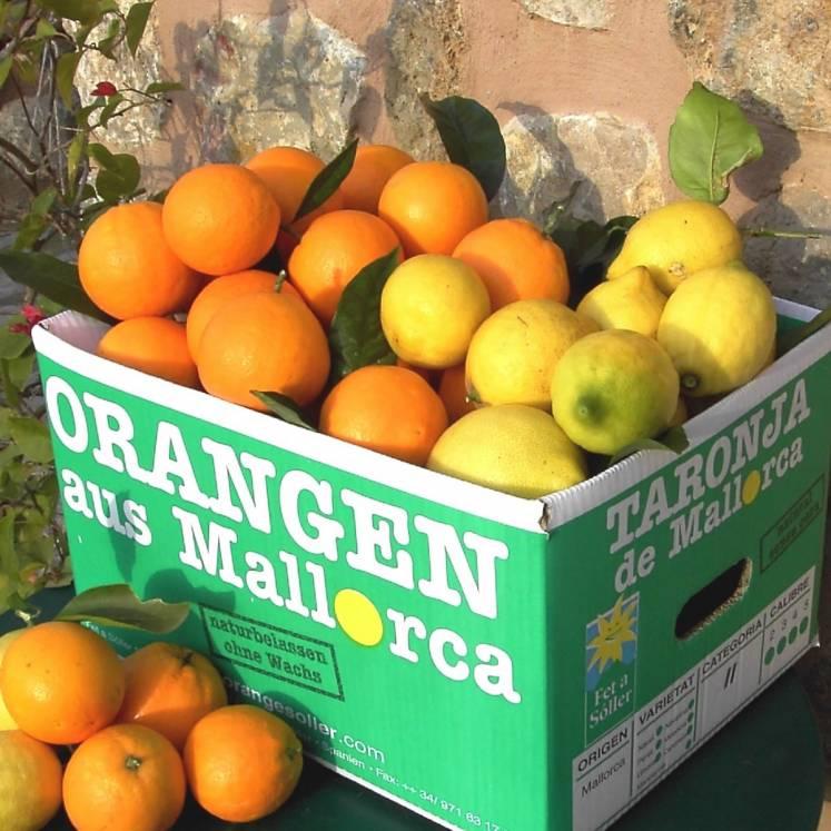 Mischkiste Orangen und Zitronen 10kg