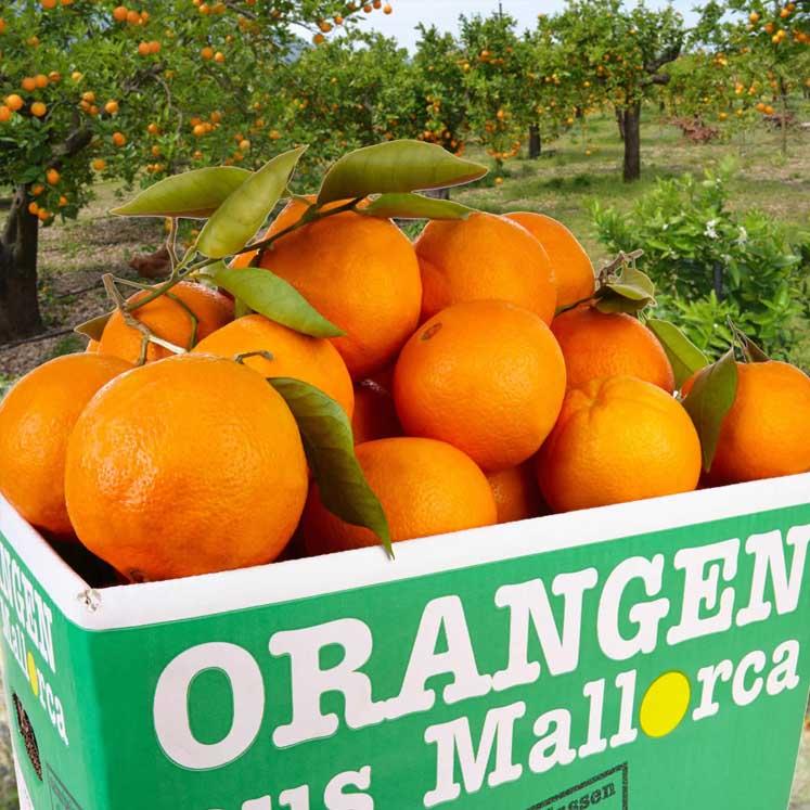 Naranjas caja de 10kg