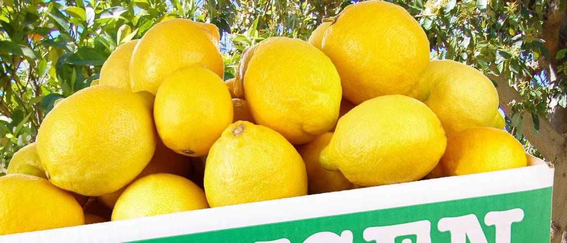 Limones de Sóller caja 10 kg