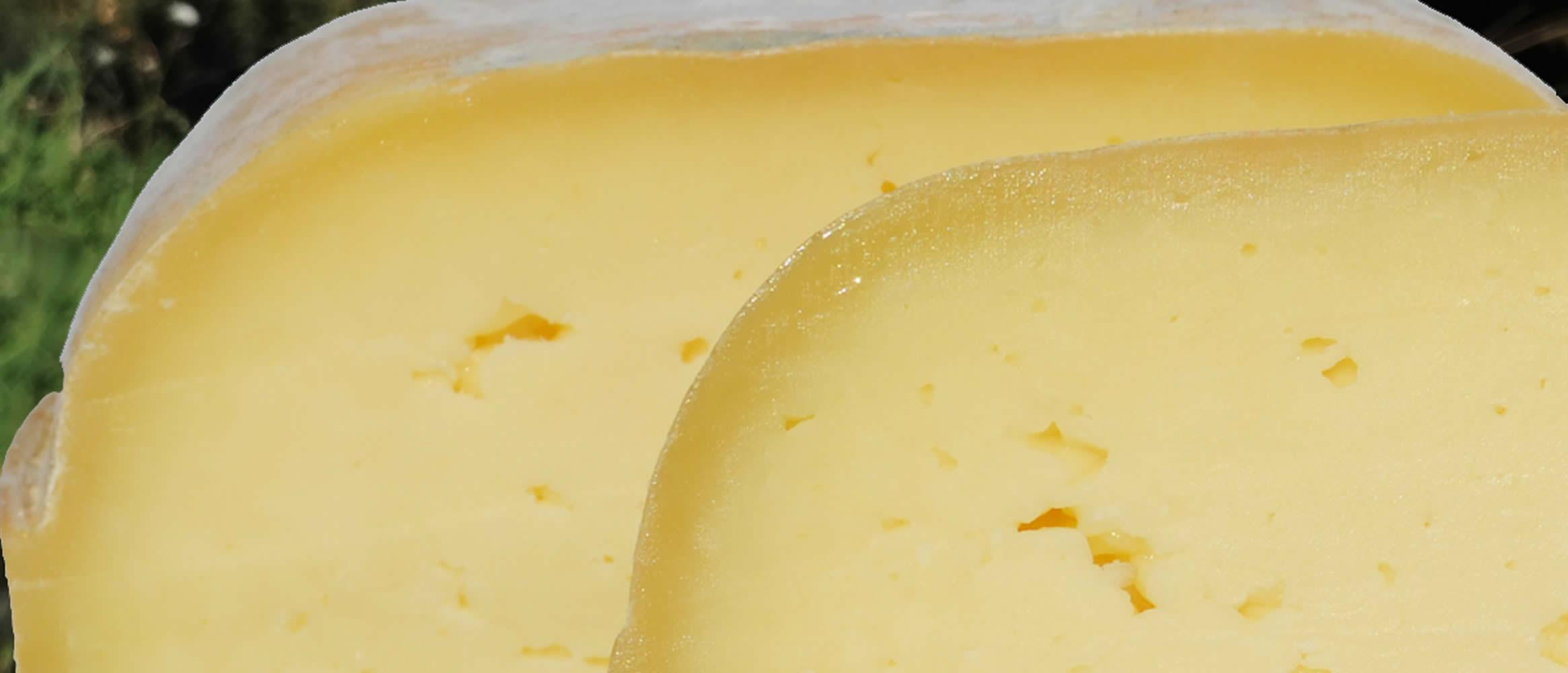 Burguera queso semi curado