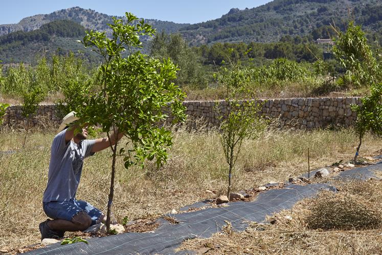 Horts de Sóller - eine unserer ersten Pflanzungen