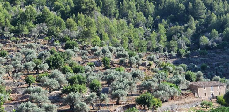 Mediterranean Island Mallorca: A real Garden Eden